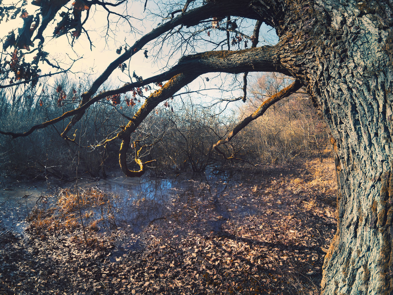 BARE TREE BY LAKE