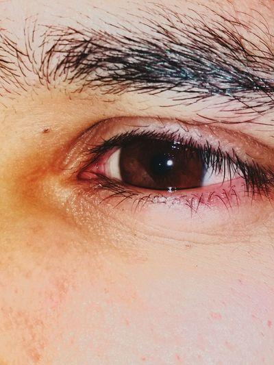 Eyesbrown