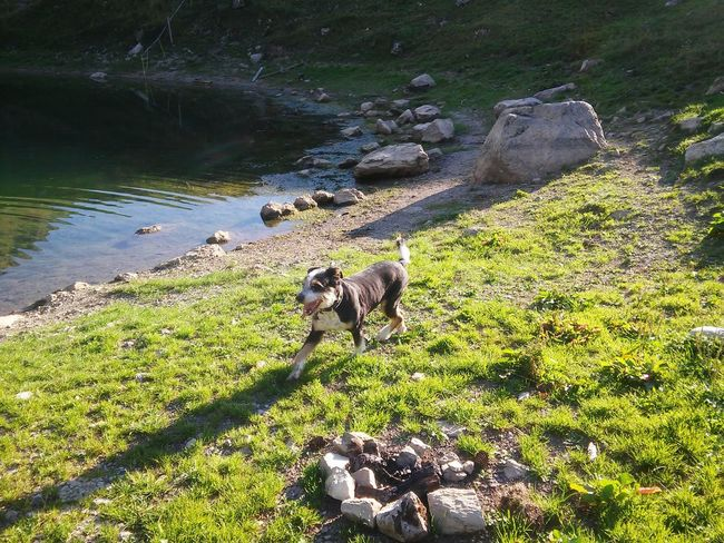 Switzerland Szwajcaria Mountains Nature Green Nature 🌞🌞☁☁⛅⛅ Dogs Of EyeEm Pet Portraits