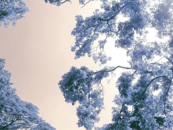 Infrared Eyeem Philippines Potpotography Landscape_Collection