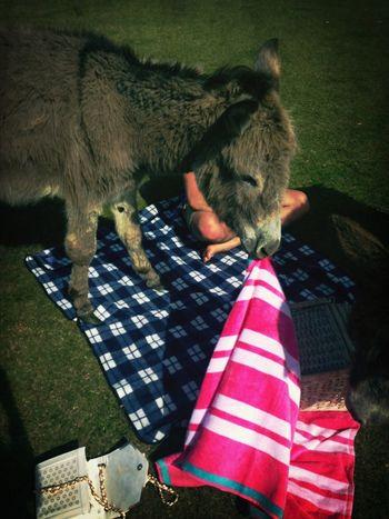 Cheeky donkey! Aha