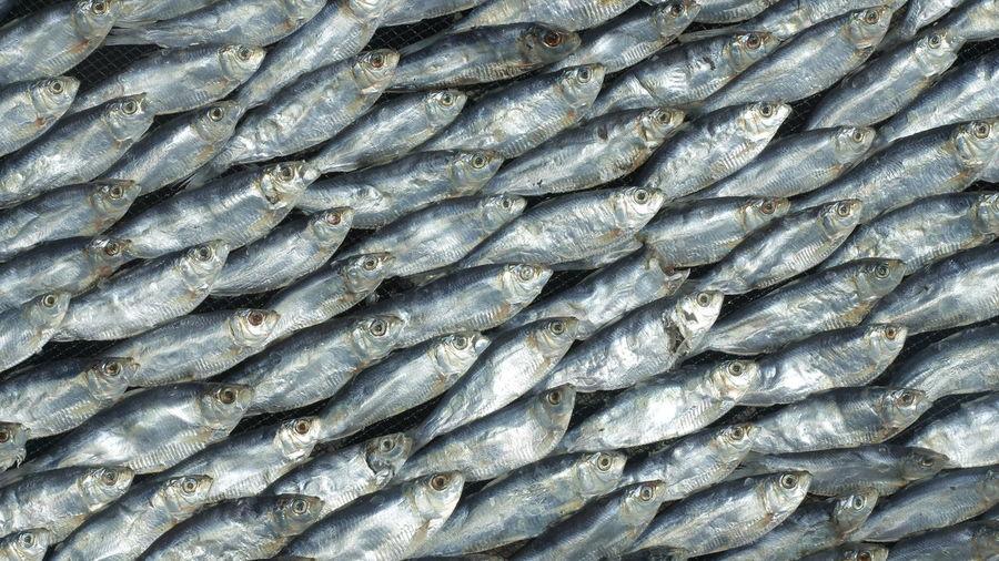 Full frame shot of fish for sale at market