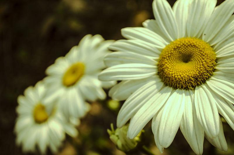 Flowers Flowerpower