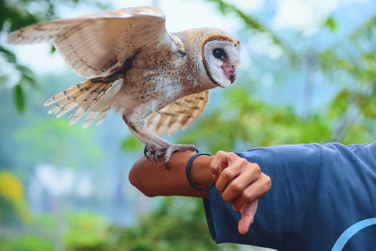 Cropped hand of man with owl against plants