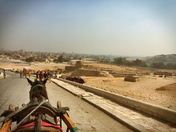 Check This Out Holiday Cairo Egypt Horse Pyramid Hello World Hanging Out Taking Photos Relaxing Enjoying Life Cheese! Hi!