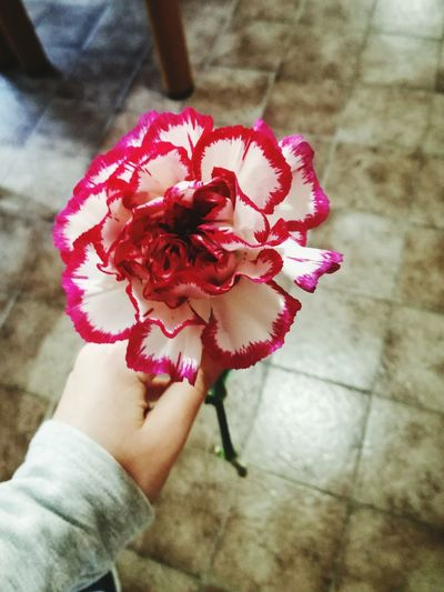 Flower Human Hand Holding Nature Outdoors Beauty In Nature Flower Head