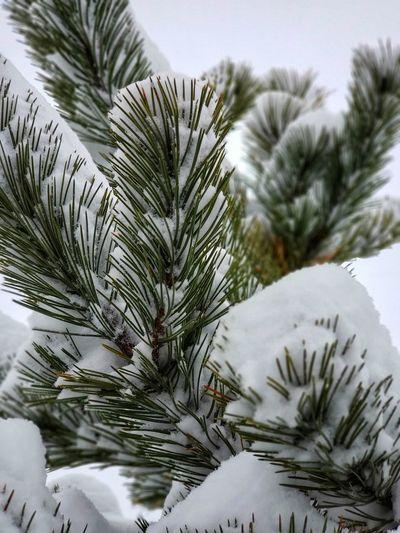 Fresh snow on a