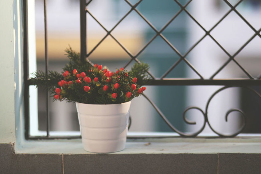 Close-up Flower Flowers Focus On Foreground Freshness Growing Growth Home Leaf No People Plant Red Red Simplicity Twig Xmas Xmas Decorations Xmas Time Xmastime Xmas🎄