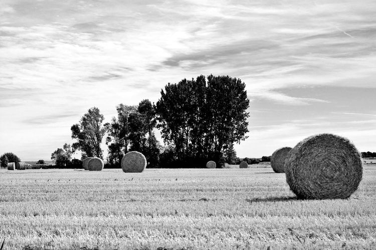 Countryside.Landscape Blackandwhite Photography Black & White Blackandwhite Nocolor Bw Photography Bw_lover France Trip France Photos France Frenchlandscapes