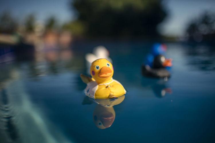 Close-up of yellow toy floating on pool