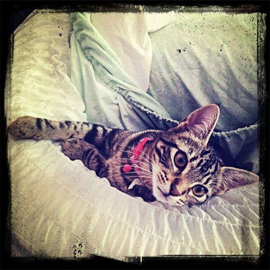 Cat  Badoom
