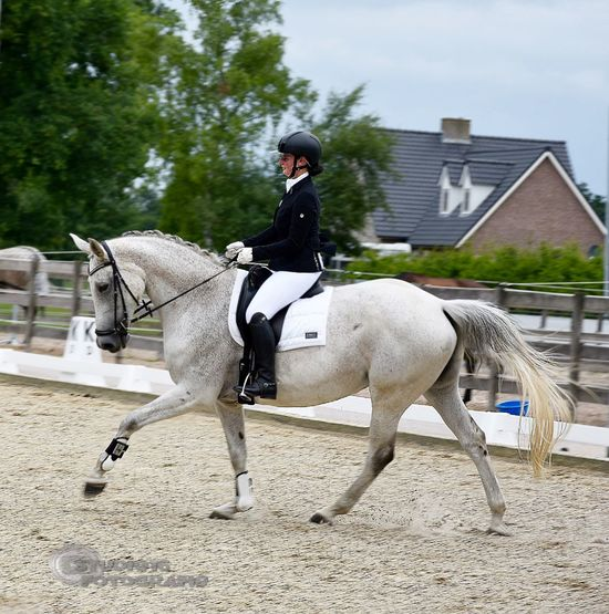 Dressage Competition Animal Themes Day Domestic Animals Equestrian Full Length Horse Horseback Riding Jockey Livestock Mammal One Animal One Person Outdoors People Real People Riding Sky Sports Photography