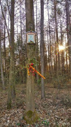 No People Poland Polska LGG3 LG  Beauty In Nature Podkarpacie Mobilephotography Nature EyeEm Religion Religia Kapliczka Tree Trees Forest