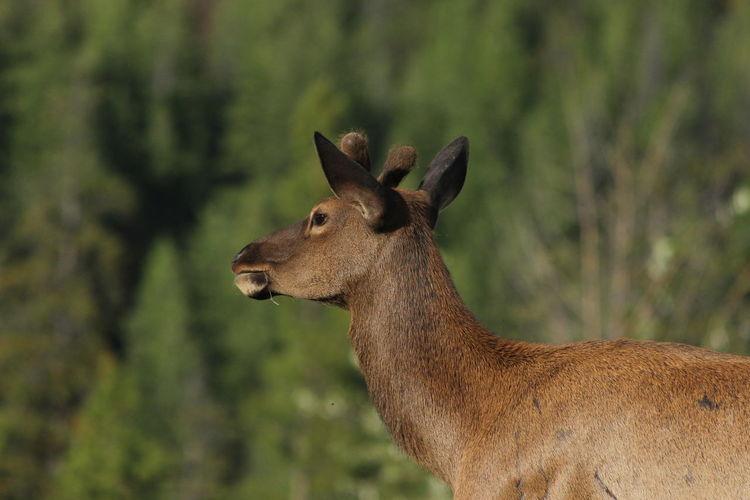 Close-up of giraffe standing on tree