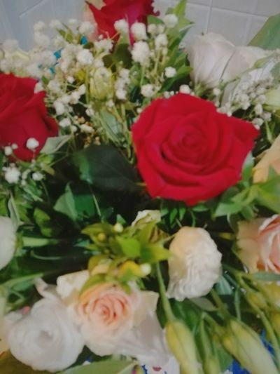Rose - Flower Flower Freshness Bouquet White Color Petal Flower Head Fragility Beauty In Nature Roses World 🌹❤️🌹 Sky Greenhouse Roma EyeEmBestPics EyeEmNewHere Eye Em Nature Lover EyeEmBestEdits Romantic Eyeem Market Nature Orchidee.