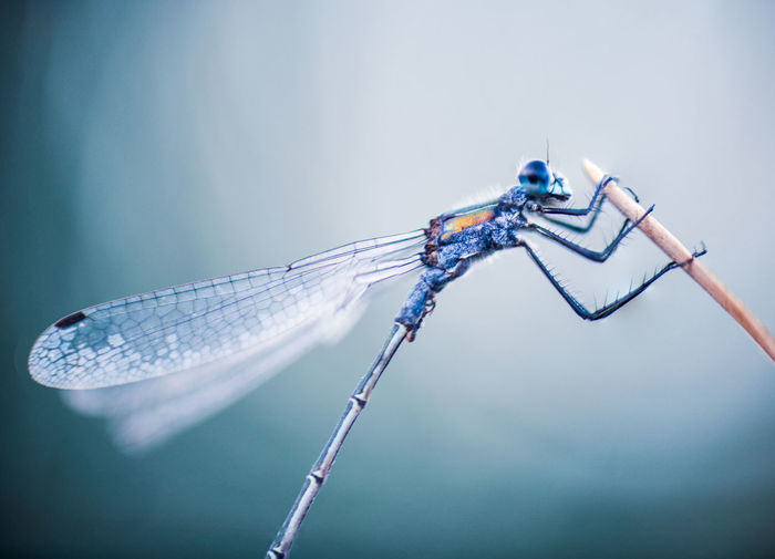 Close-up of dragonfly damselfly