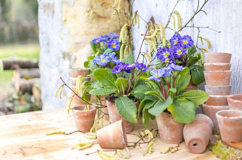 Plant Leaf Flower Nature Outdoors Growth Frenchgarden Beauty In Nature France Primroses Spring Flowers Pottery Photography No People Garden Photography