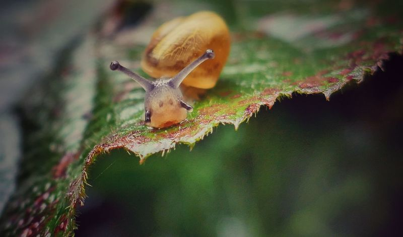 Snail🐌 Slug Relaxing Taking Photos Summertime Summer Memories 🌄 Nature On Your Doorstep EyeEm Best Shots - Nature Capture The Moment No People Macro_collection From My Point Of View Macro Nature Hello World Relaxing Eyem Best Shots Nature_collection Snail ❤