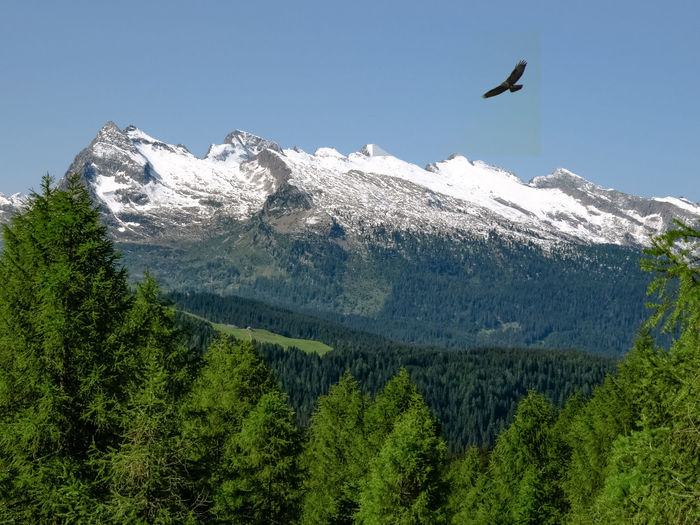 Hawk - Bird Flying Mountain Late Snow Springtime Landscape Scenics - Nature Beauty In Nature Mountain Range Nature Animal Wildlife Snowcapped Mountain No People Outdoors A Sense Of Freedom Day Woods Snow Bird One Animal Mountain Peak Blue Sky Landscape_photography