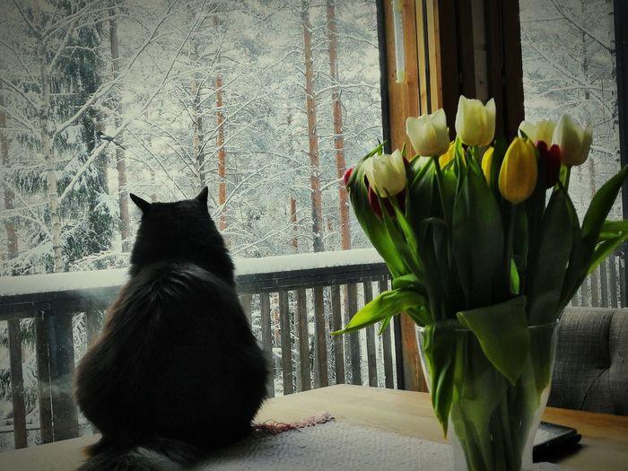 Flower Pets