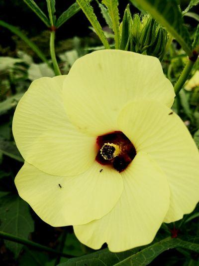 Ocra Bloom First Eyeem Photo
