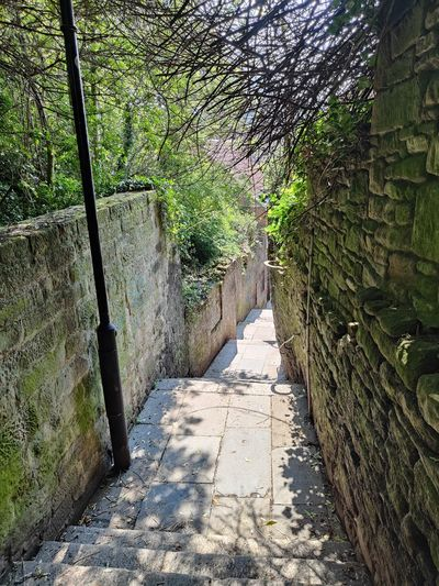 Footpath amidst trees in the wall