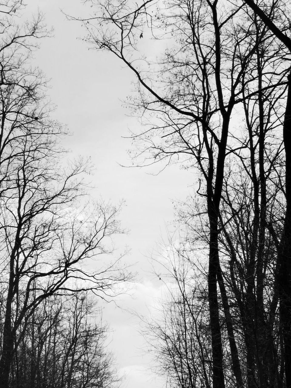 tree, bare tree, low angle view, nature, branch, no people, tranquility, beauty in nature, outdoors, forest, day, sky, scenics