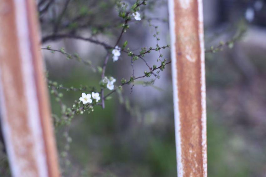 祈りを織りあげる SSnapshots Of LifeJJapanLLiving LifeEEyeEm Nature LoverfFlowersDDreaming