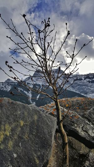 Tree Nature Sky Outdoors Cloud - Sky No People Scenics Beauty In Nature Day Landscape Canmore Alberta Canada Beauty In Nature Winter Getty Images Growth Nature