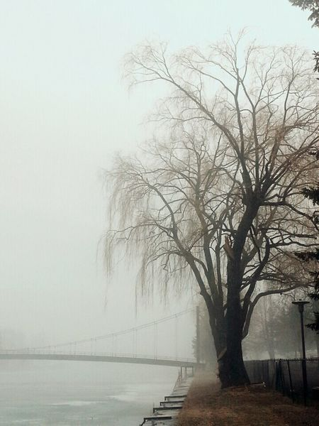 Taking Photos EyeEm Nature Monochrome Capture The Moment EyeEm Gallery Naturelovers Nature_collection Populaire Photo Of The Day Tree Alone Canal Arbre Solitude Calm Calme Et Solitude Brume Bruine Brouillard Foggy Day Drizzle Bridge Relaxing Canada