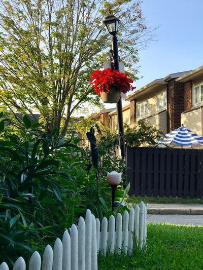 Nature Front Or Back Yard Flower Outdoors Growth Day Building Exterior No People Architecture Beauty In Nature Ottawa Canada, Eh? Tranquility Investing In Quality Of Life Grass Tranquil Scene Sunlight