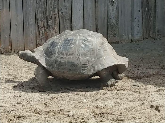 Tortoise Shell Tortoise Reptile Sand Sea Turtle Beach Turtle Close-up