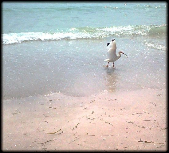 Life Is A Beach Ocean Life Ocean Bird Beach Beach Photography Ocean Landscapes With WhiteWall Oceanside Waves Photography In Motion