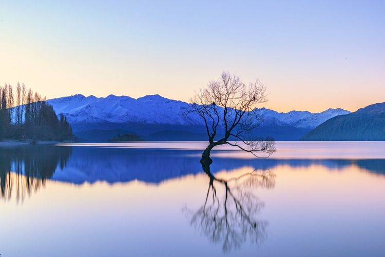 Sunset at Lake Wanaka New Zealand Landscape_photography Trees Water Reflections Snow ❄ Long Exposure Mountains