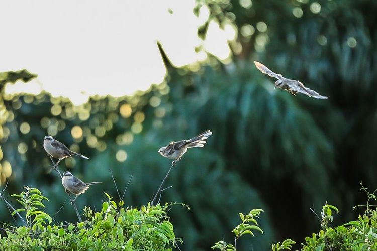 Birds in the air Bird Animals In The Wild Animal Themes Flying Animal Wildlife Nature One Animal Spread Wings Mid-air Outdoors Day No People Plant Focus On Foreground Beauty In Nature Tree Close-up