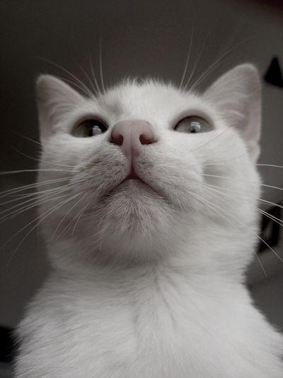 Cats Cat Catcatcat Snapcat