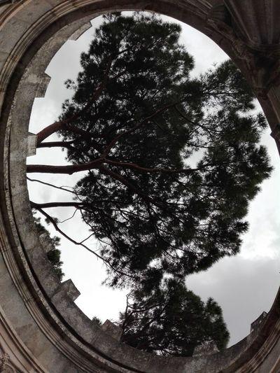Tree City Sky Architecture Close-up Cloud - Sky