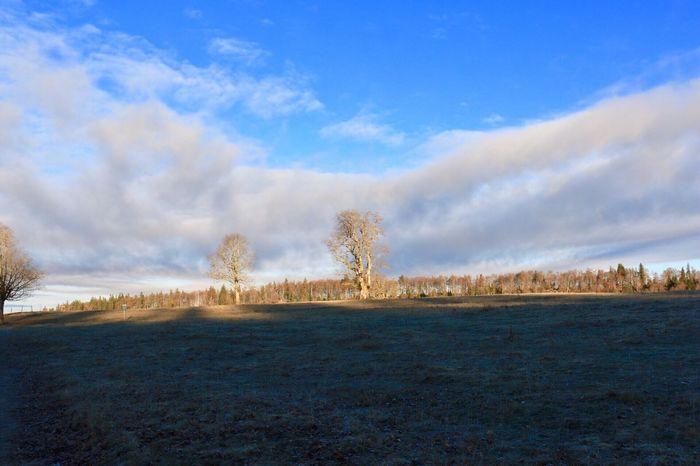 Sky Nature Cold Temperature Tree Tranquil Scene Cloud - Sky