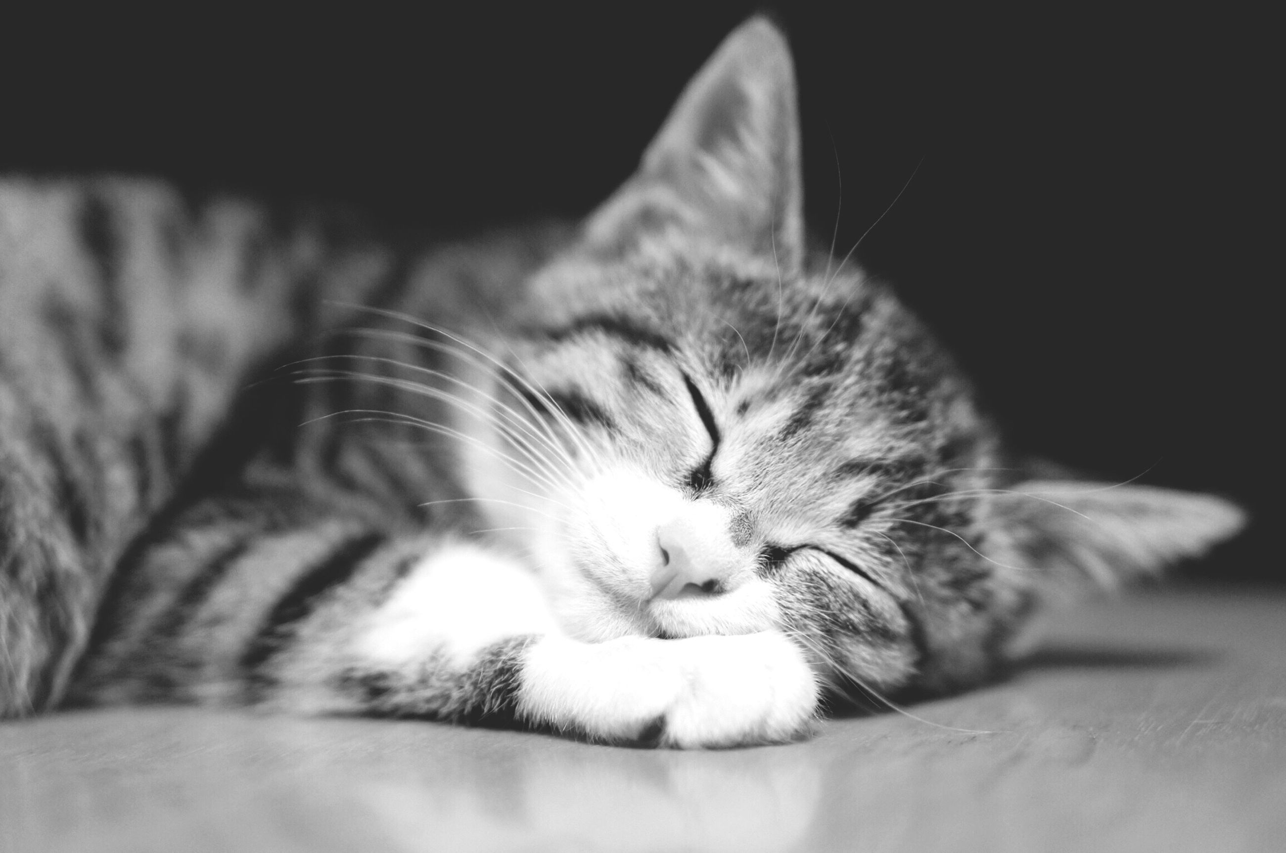 domestic cat, cat, pets, feline, domestic animals, one animal, animal themes, mammal, whisker, indoors, relaxation, resting, close-up, lying down, sleeping, eyes closed, animal head, bed, no people, home interior