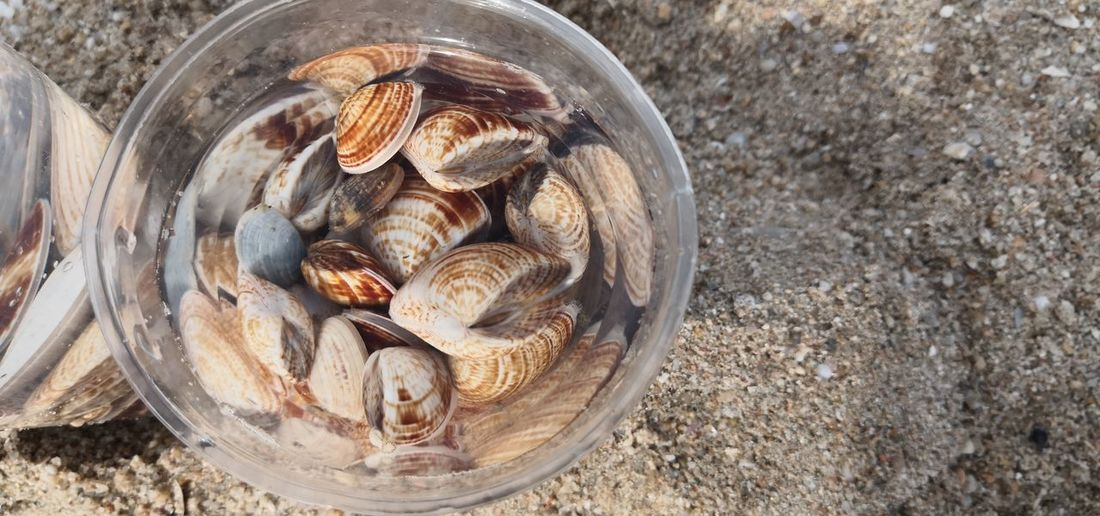 High angle view of shells in bowl