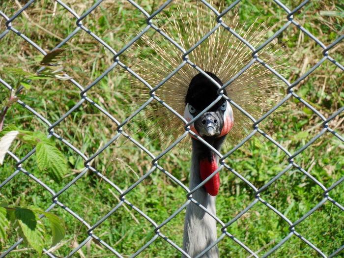 Portrait of bird in fence