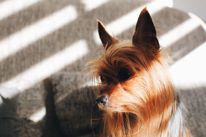 Cute Dog Mammal Animal Themes One Animal Animal Pets Domestic Animals Domestic Looking Sunlight Close-up