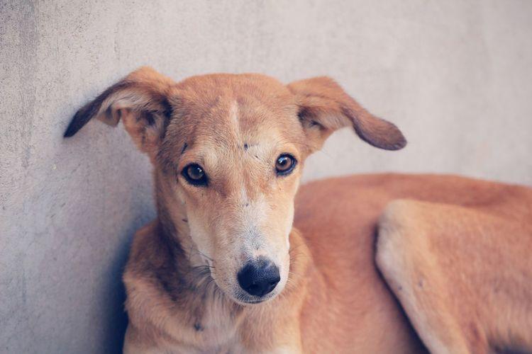 Close-up portrait of stray dog