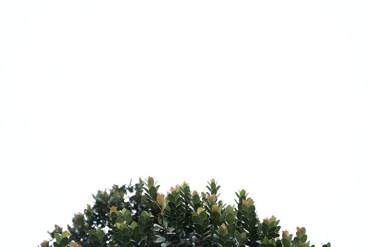 High section of trees against clear sky