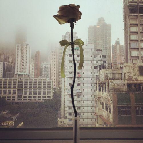 홍콩 Rose🌹 Rose