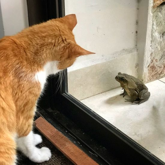 Stare Down Curiosity Toad Staredown Mammal Animal Animal Themes Cat Domestic Cat Feline One Animal Pets No People