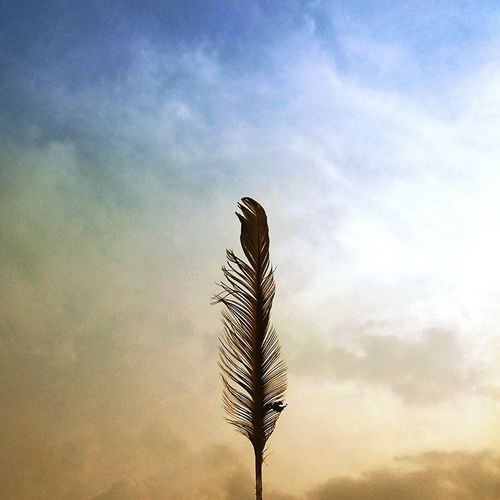"""""""Those who hope in lord they will renew strenght. They will soar on wings like eagle, they will run; not grow weary, they will walk; not be faint."""" Relaxing Folow Me Hello World Newhere The_nikon_ Follow Like Thnakyou Feather  Clouds"""