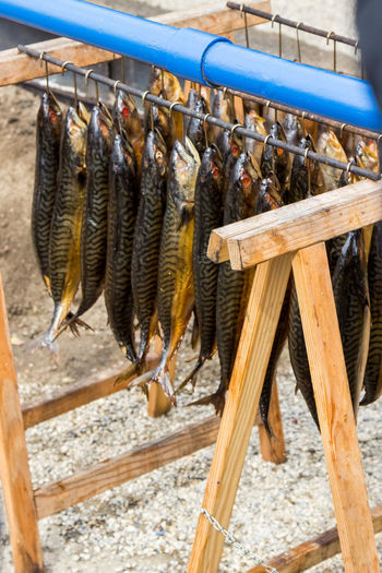 A day at Oktoberfest Atlantic Mackerel Fischer Vroni Fresh Fish Freshness Oktoberfest Oktoberfest 2017 Räucherfisch Wiesn Wiesn 2017 Close-up Dried Food Fish Food Food And Drink Freshness Makrele Makrelen No People Seafood