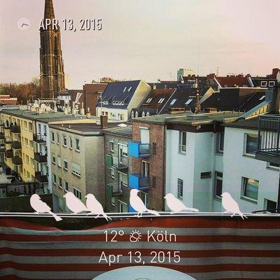 Über den Dächern von Köln an einem herrlichen Frühlingsabend! Köln Kolle Frühling