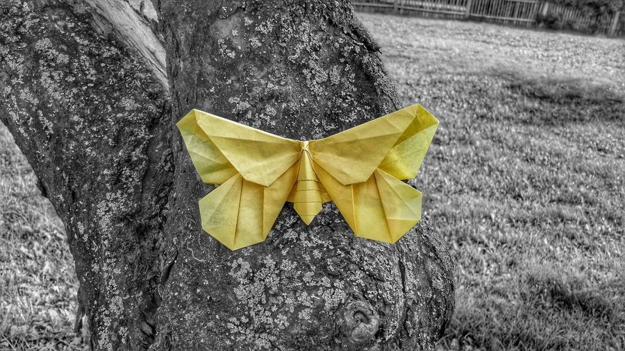 Origami Butterfly Hugging A Tree EyeEm Best Shots My Hobby Colorsplash Simplicity Color Explosion Getting Inspired EyeEm Nature Lover